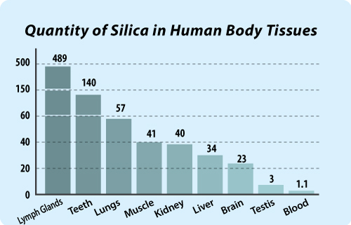 Silica In Body